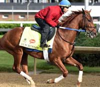 Travers Stakes horse racing betting preview