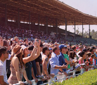Four horse to watch and wager on when betting the Santa Anita Derby odds